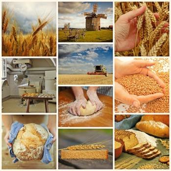 bread-1579136_960_720