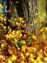 leaves-63303_960_720