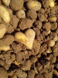 potato-540386_960_720
