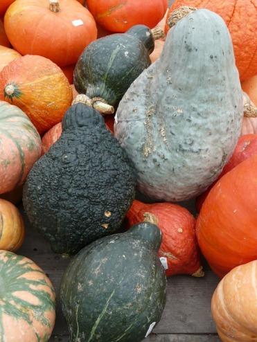 pumpkins-61269_960_720